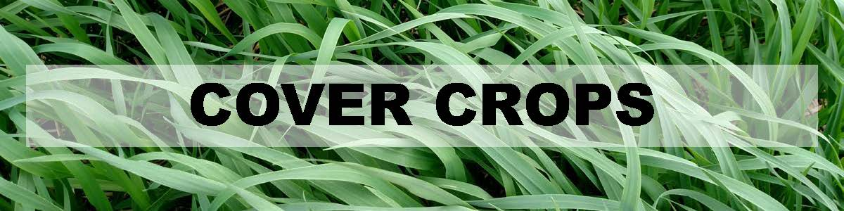 Cover Crops header - image of oats cover crop