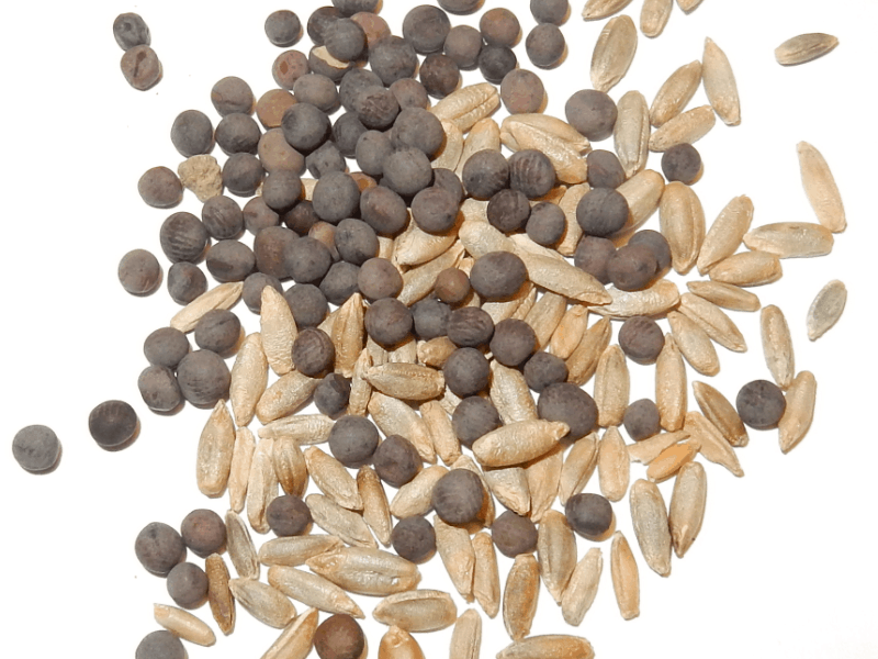 Image of Cover Crop Seed