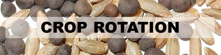 Crop Rotation Header - image of seeds