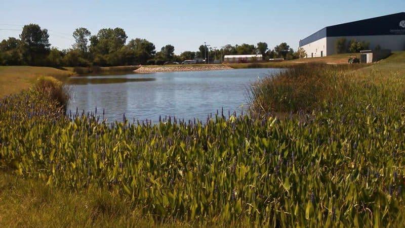 Pond Edge Enhancement