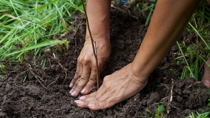 person's hands planting trees