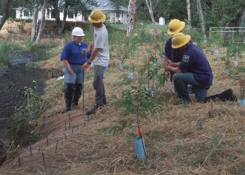 NRCS employees planting native plants on a streambank