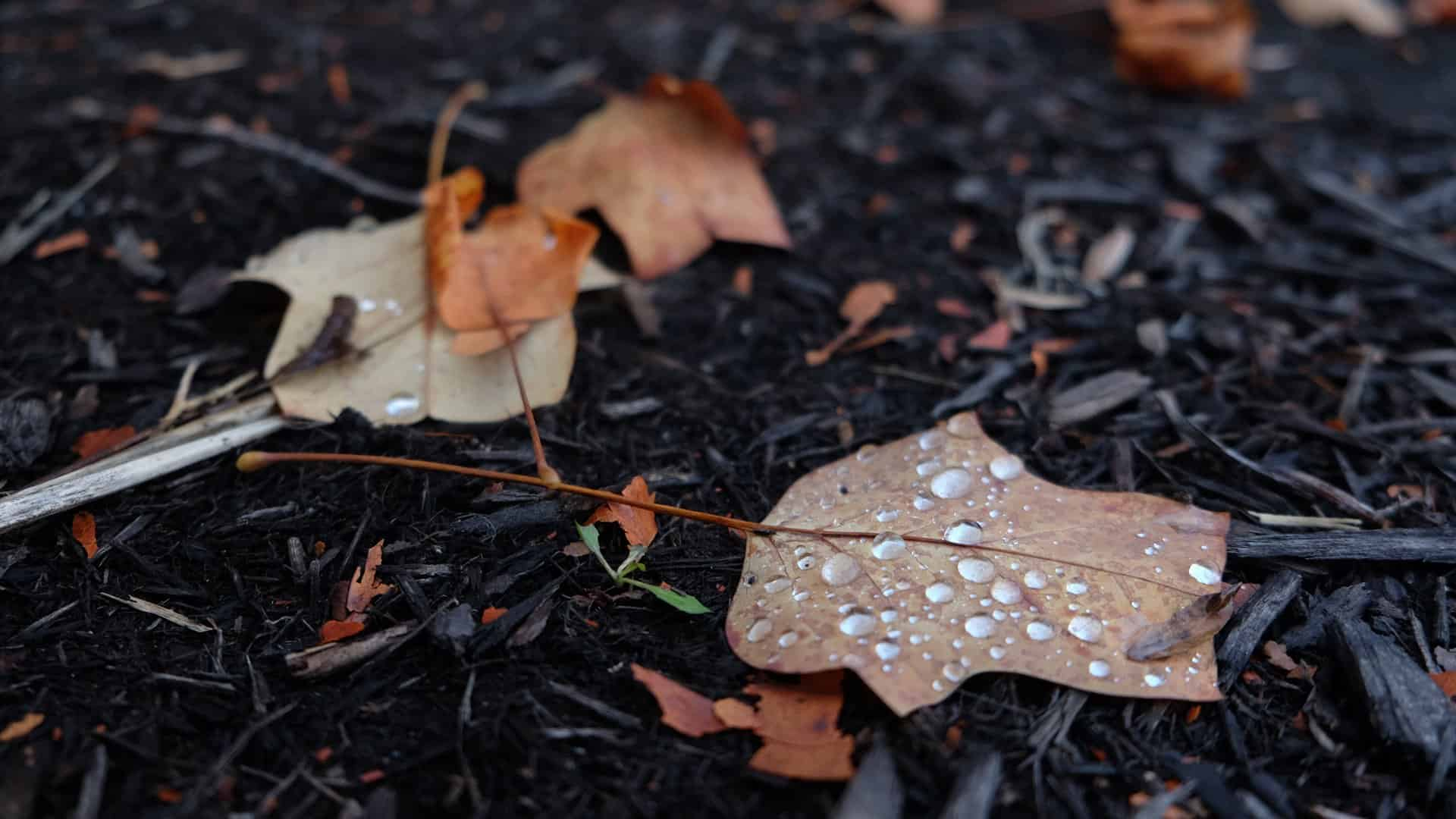 water droplets on fall leaf