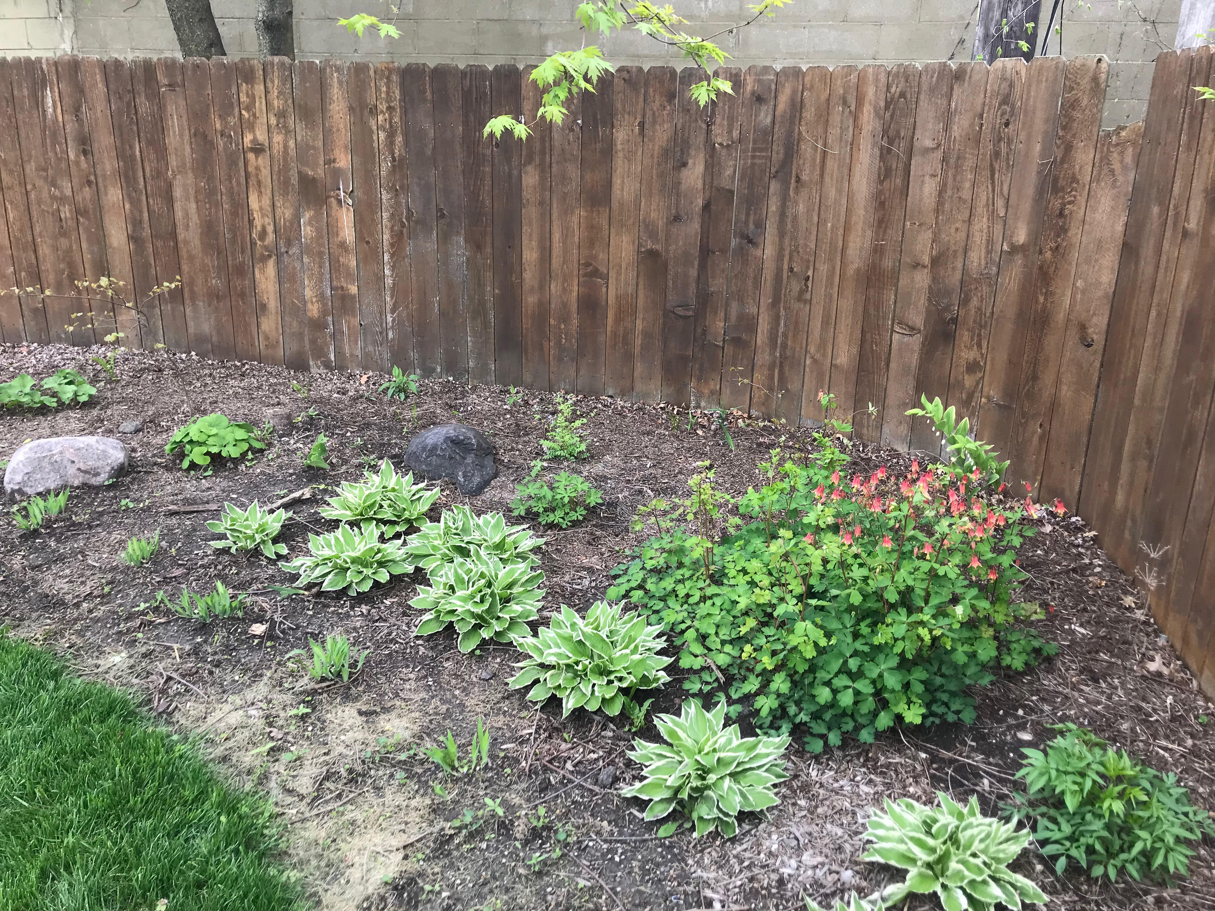 Native Plantings in yard